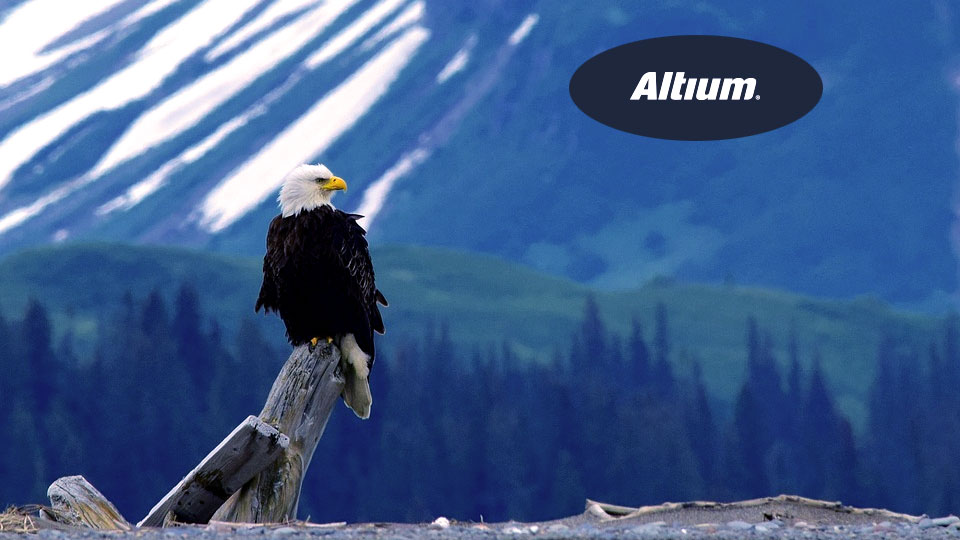 an eagle perched in the wild