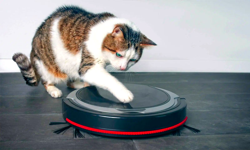 cat looking at a robot vacuum cleaner