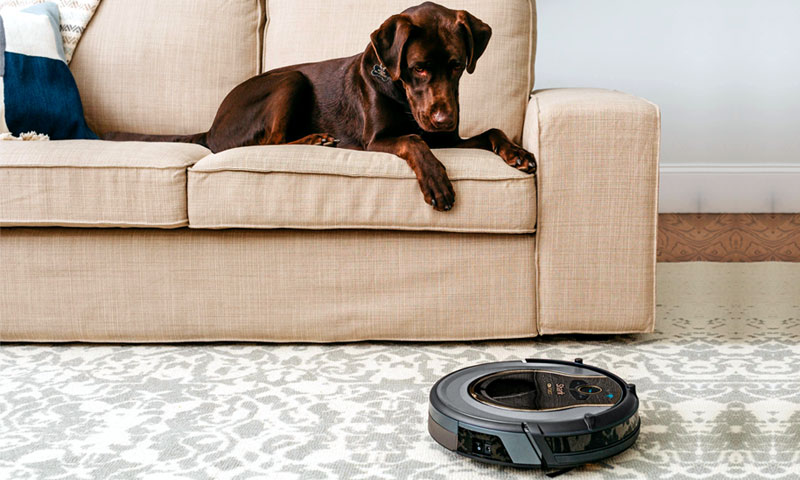 brown dog looking at a robot vacuum cleaner
