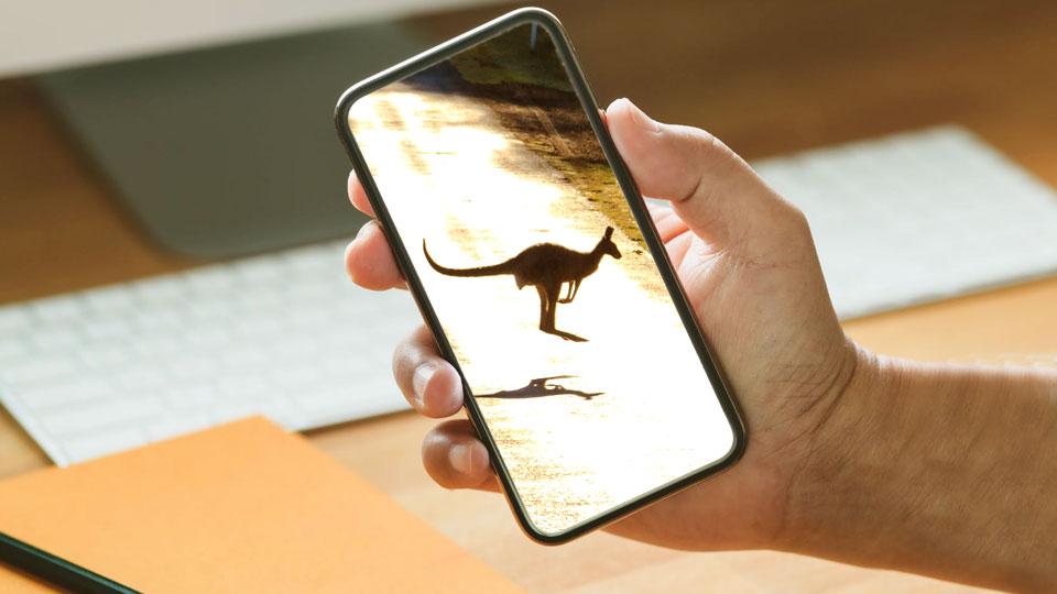 holding smartphone canguru