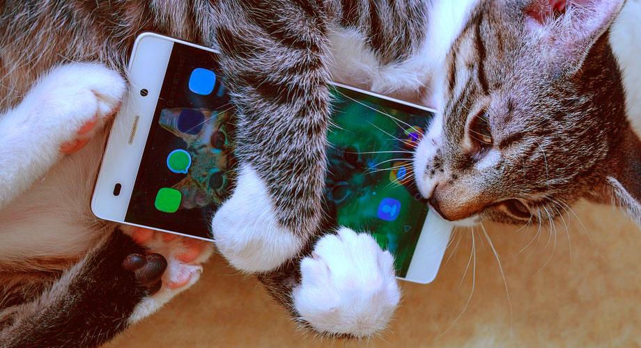 cat hugging a smartphone