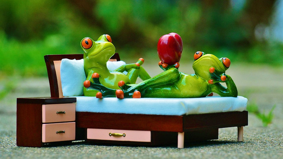 a couple of frog in bed and with bedside table
