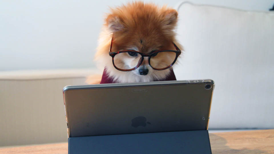 a dog with glasses looking at the ipad